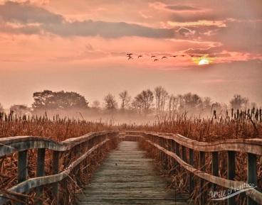 Dawning Boardwalk